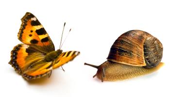 snailsAndButterflies.jpg